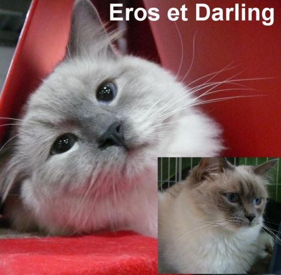 eros darling