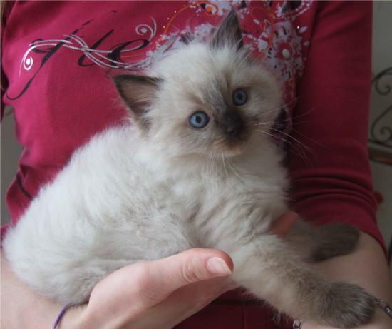 eden lili notre seul petit chaton pour lequel nous n'avons aucunes nouvelles