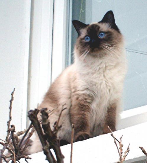 tours un regard d'un bleu profond
