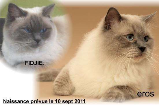 Fidgie et Eros parents de 3 chatons (11/09/11)